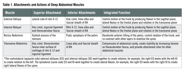 abdominal muscles functionality in fitness program ace prosource