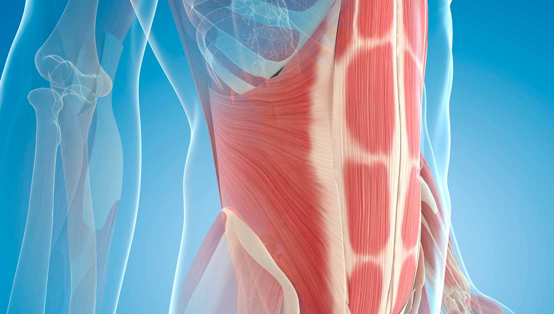 The Buzz About Anti-rotation Core Training