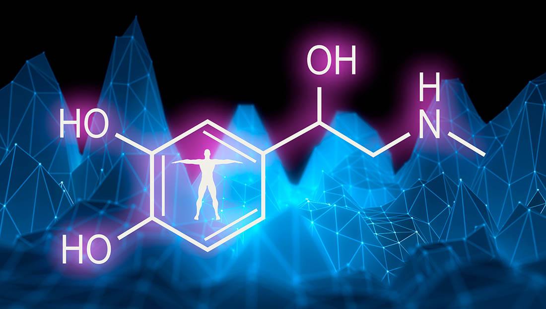 Understanding the Link Between Hormones and Metabolism