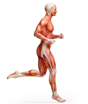 exercise science anatomy