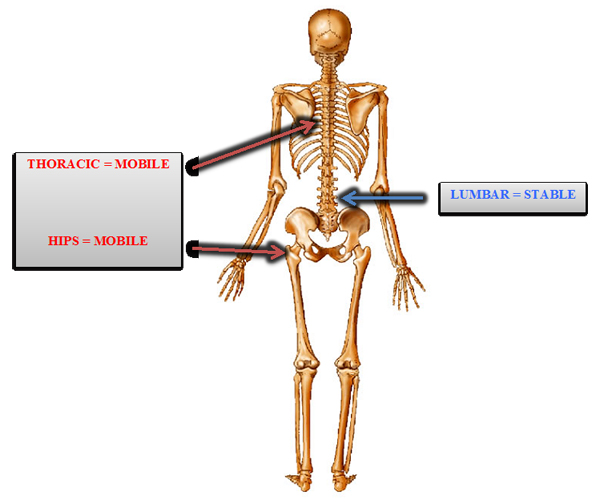 Spine mobility