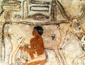the neolithic revolution an important historical The fascinating history of beer reveals that it may be responsible for the   americans are taught in school about the agricultural revolution.