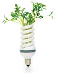 green light bulb